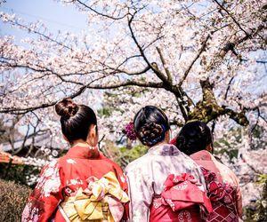 blossom, geisha, and girls image