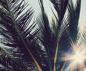 palms, sun, and summer image