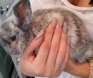 nails, bunny, and animal image
