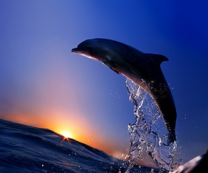 dolphin, ocean, and blue image