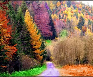 autumn, colors, and tree image