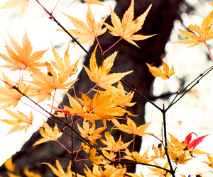autumn, bokeh, and branches image