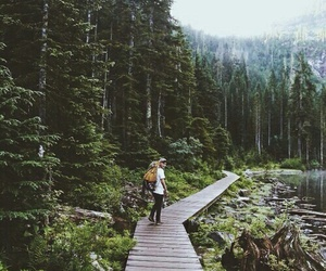 forest, nature, and adventure image