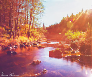 autumn, fall, and sunray image