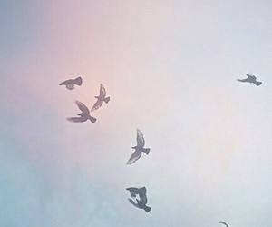 bird, sky, and fly image