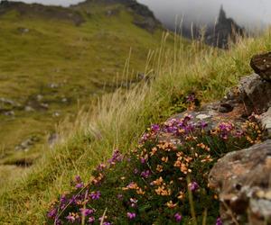scotland and sparkle image