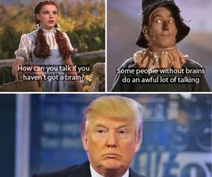 funny, donald trump, and tumblr image