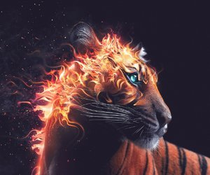 fuego, tiger, and animales image