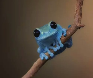 blue, frog, and nature image