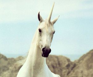 unicorn, white, and horse image