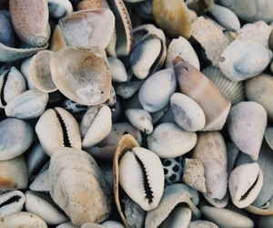 beach, indie, and shells image