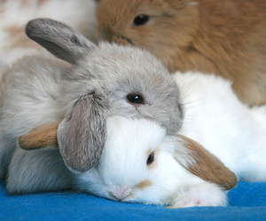 bunnies and bunny image