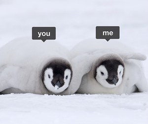 couple, penguins, and cute image