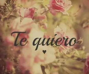 love, te quiero, and flowers image