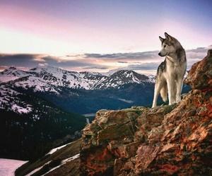 dog, mountains, and animal image