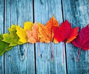 autumn, leaves, and red image