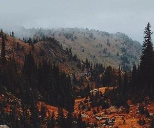 autumn leaves mountain image