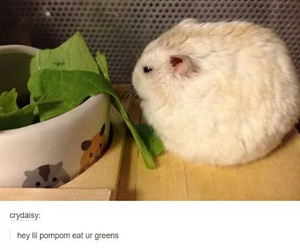 adorable, Awe, and greens image