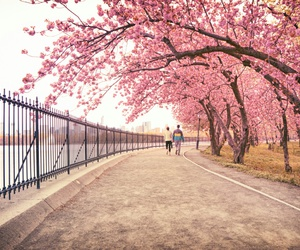 arbres, chemin, and pink image