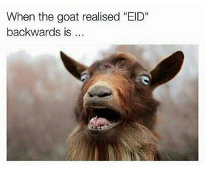 eid, funny, and humour image