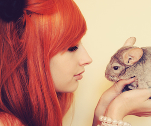 girl, Chinchilla, and red image