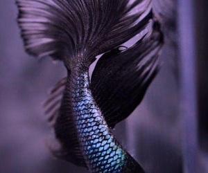 fish, black, and animal image