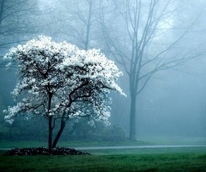 tree, nature, and white image
