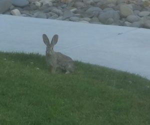 big ears, bunny, and nature image