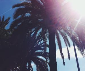 palms, sky, and sun image