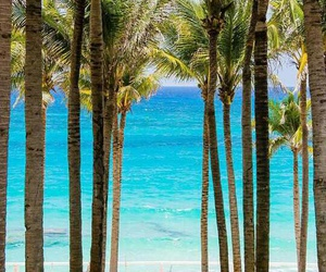 beach, nature, and palmtrees image