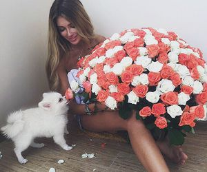 flowers, dog, and roses image