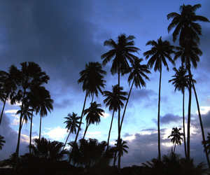 sky, blue, and palm trees image