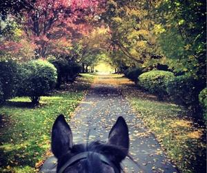 cavallo, rosa, and asfalto image