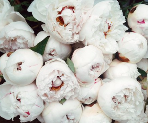 flowers, black and white, and peonies image