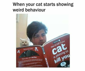 cat, funny, and weird image