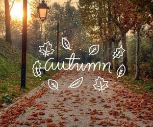 autumn, inspiration, and leaves image
