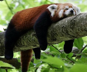 cute, animal, and tree image