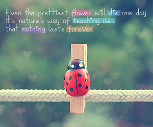 quote, forever, and flowers image