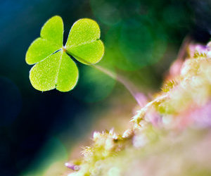 Dream, green, and lucky image