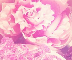 flower, rose, and shiny image
