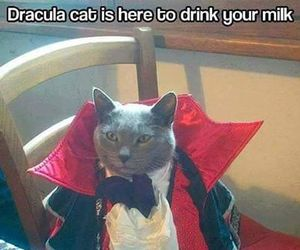 funny, cat, and Dracula image