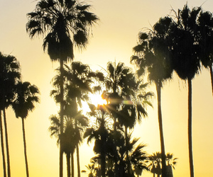 palm trees, sunset, and tumblr image