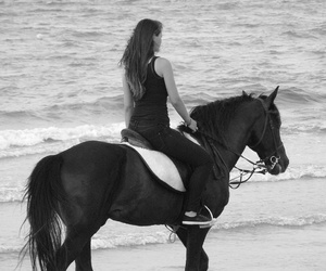 black and white, horse, and horses image