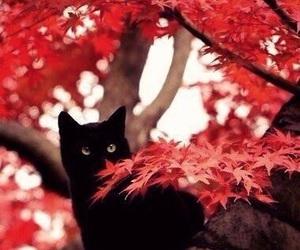 cat, autumn, and tree image