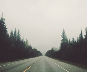 road, tree, and forest image