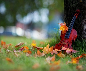 autumn and violin image