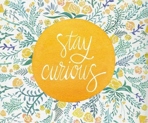 quote, curious, and flowers image
