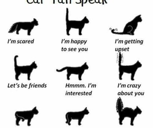 cats and language image