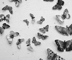 black and white, photography, and tumblr image