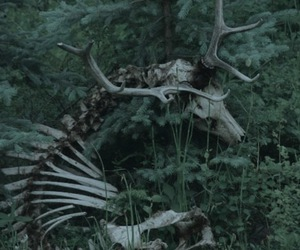 deer, forest, and skeleton image